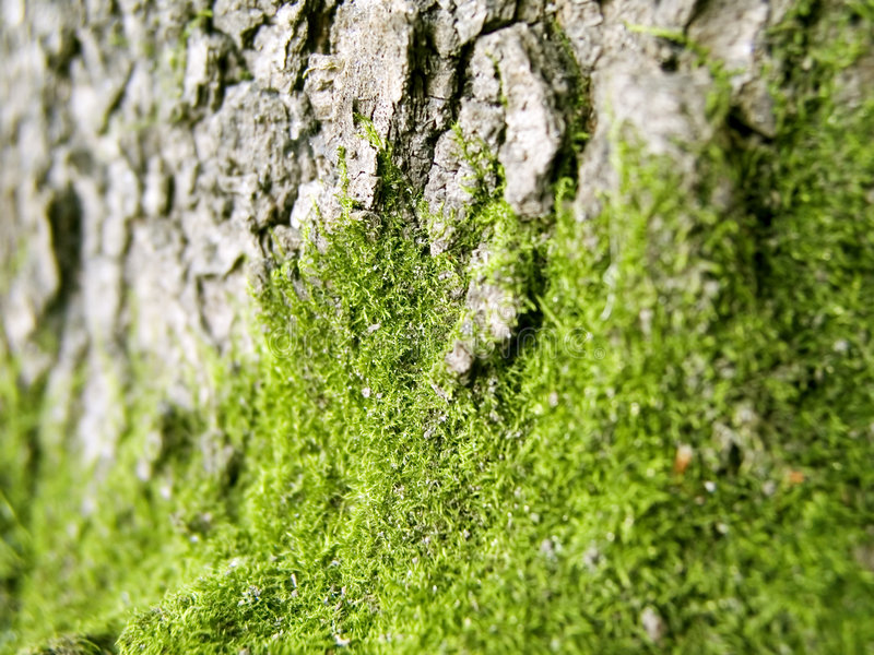 Download Moss 1 stock image. Image of fluffy, flora, natural, sleek - 456069