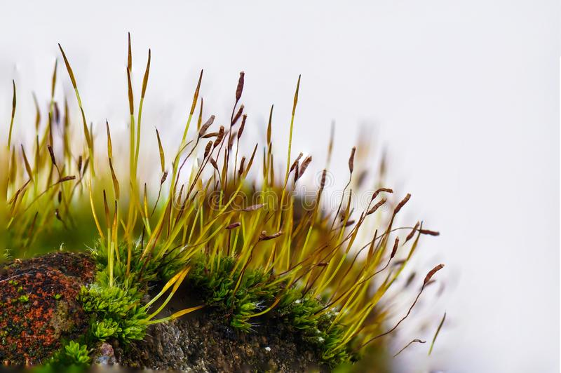 Moss royaltyfria bilder