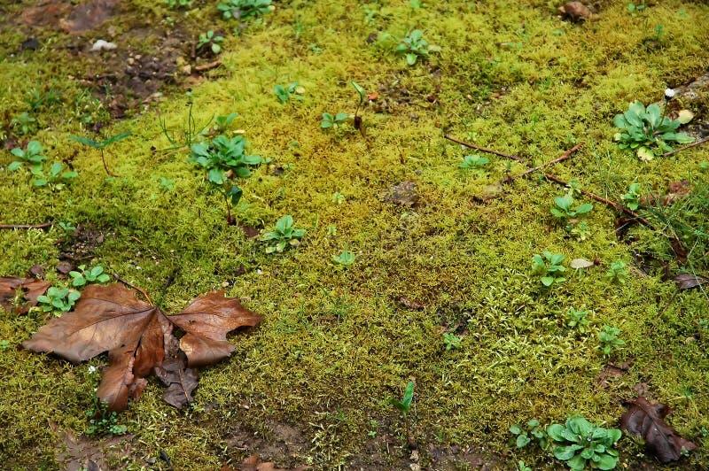 Download Moss zdjęcie stock. Obraz złożonej z trawy, mech, br, jesienny - 136792