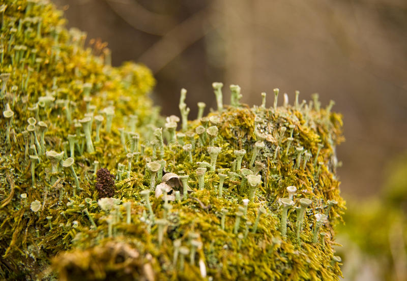 Download Moss Royalty Free Stock Image - Image: 15070716