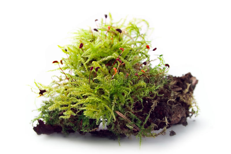 Download Moss Stock Photo - Image: 16979920