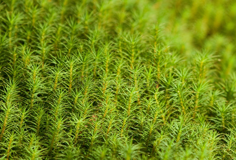 Download Moss stock image. Image of park, background, wild, green - 27408645