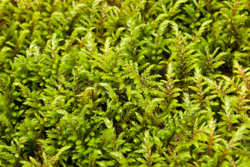 Download Moss stock image. Image of textured, growth, closeup, conservation - 6410551