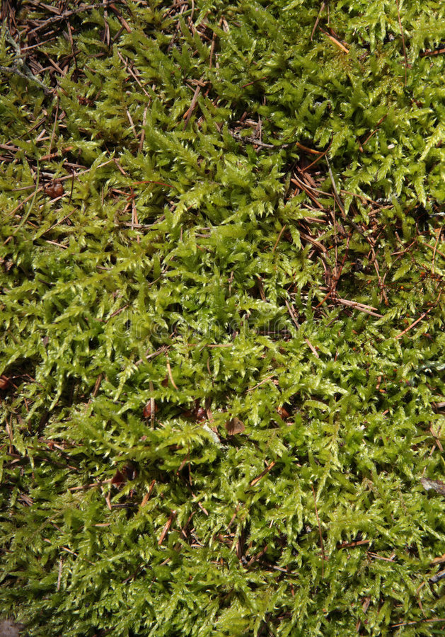 Download Moss stock image. Image of musk, leaf, ground, damp, grass - 8192543