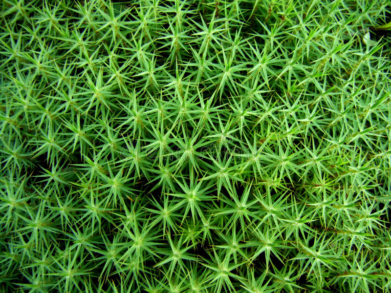 Download Moss background stock photo. Image of nature, pattern - 3353588