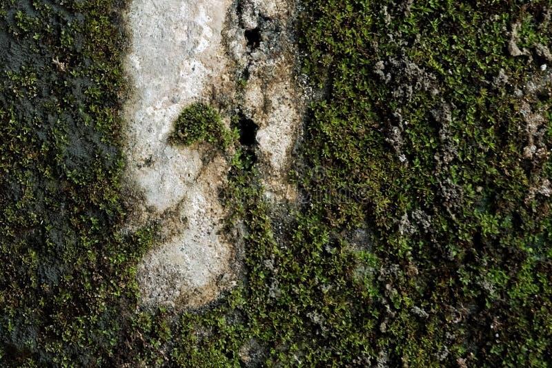 Moss Background imagen de archivo
