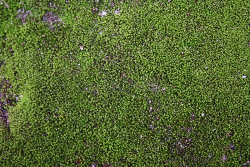 Moss Background Texture stockfotos