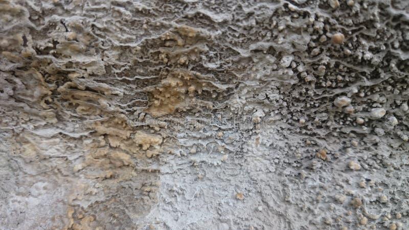 Moss Background Texture immagini stock libere da diritti