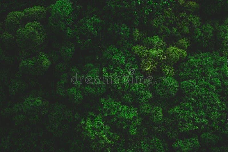 Moss Background Texture atmosferico immagini stock libere da diritti