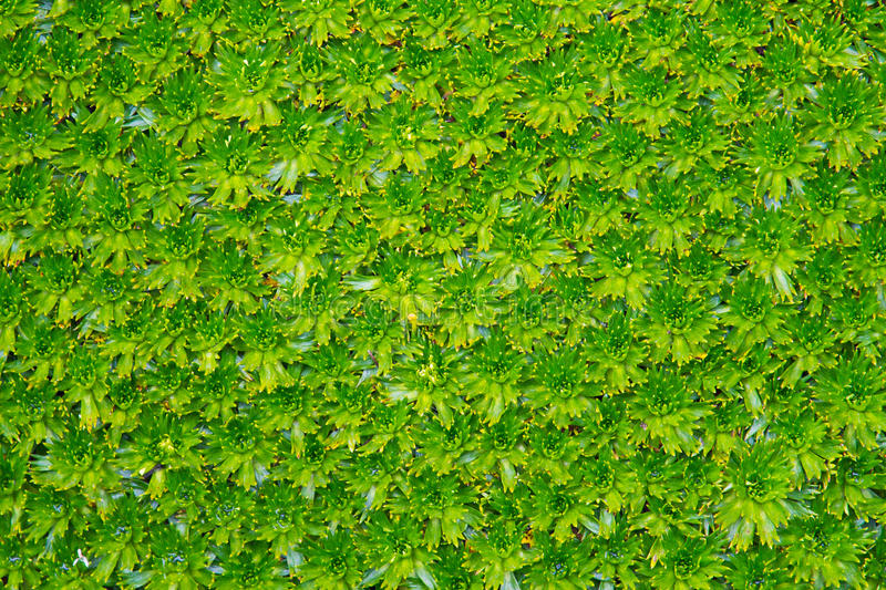 Download Moss Bed Royalty Free Stock Images - Image: 26292089