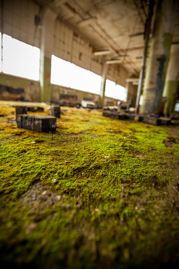 Moss and blocks. Moss growing on an abandoned factory floor royalty free stock photography