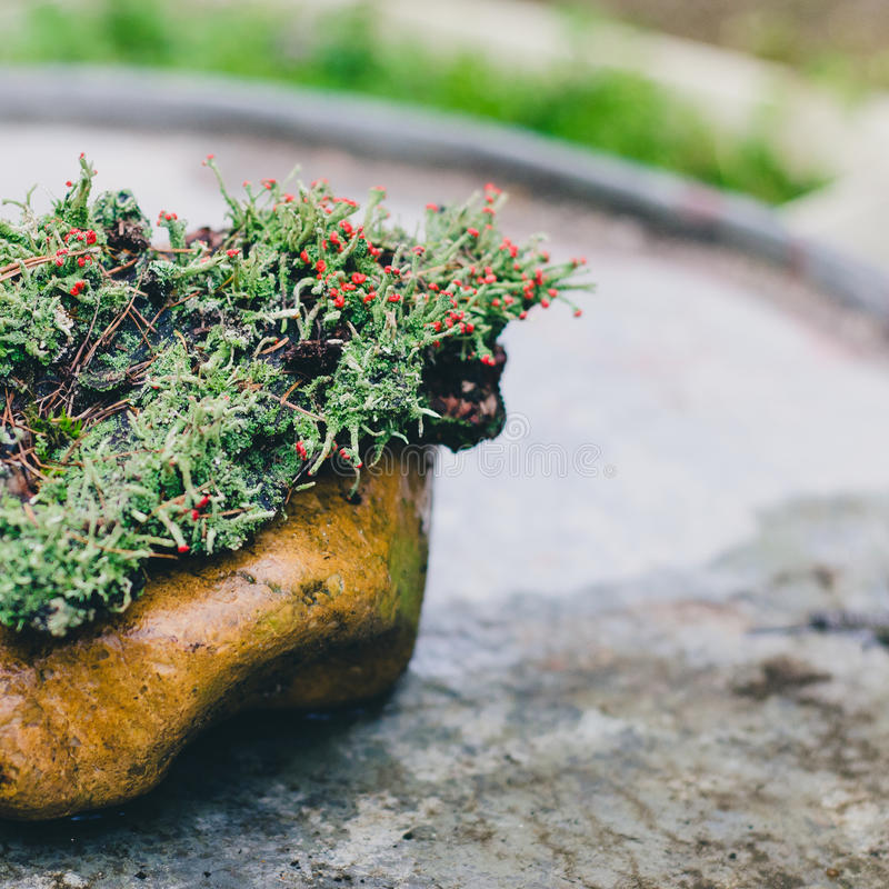 Moss bloom on suiseki stock photos