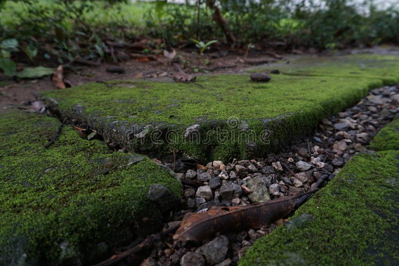 Moss on the cement floor. royalty free stock photo