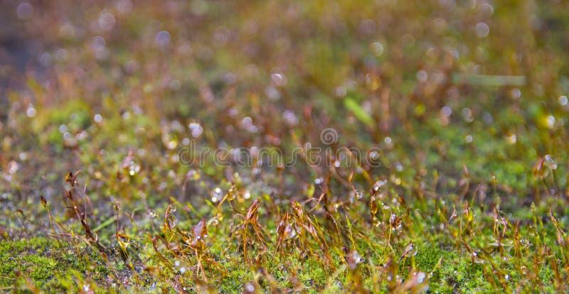 Moss Close Up e fondo vago variopinto fotografia stock libera da diritti