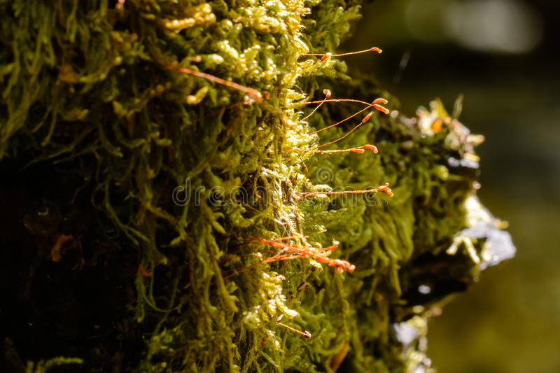 Moss. Closeup from moss on atree trunk stock images