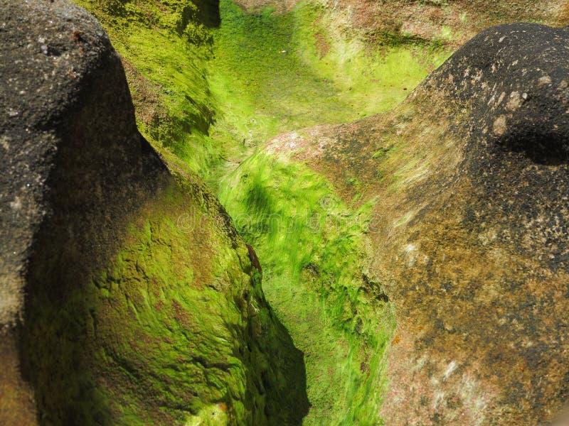 Download Lichen On Coastal Rock Detail Stock Photo - Image: 36681574