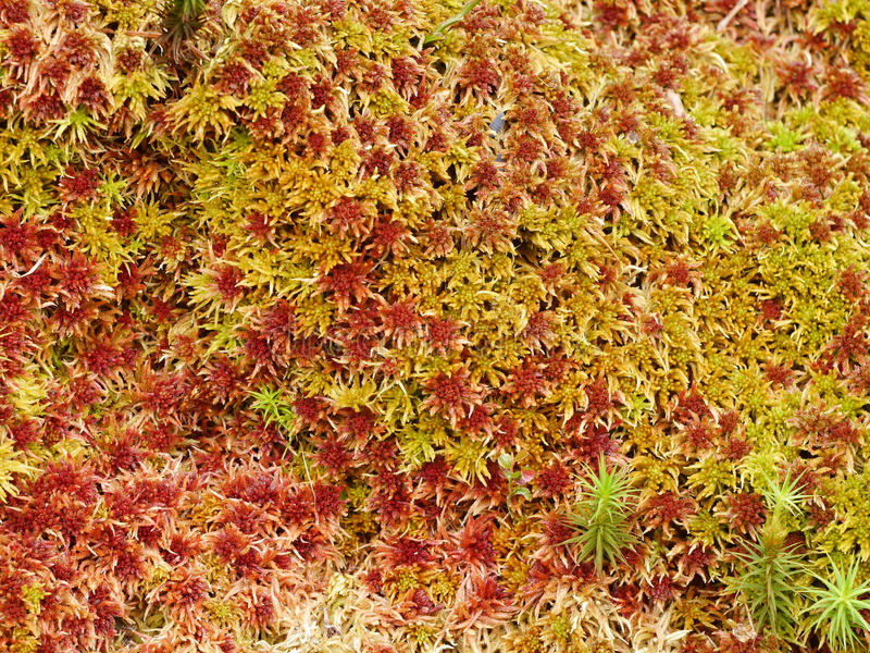Moss colored structure stock photo