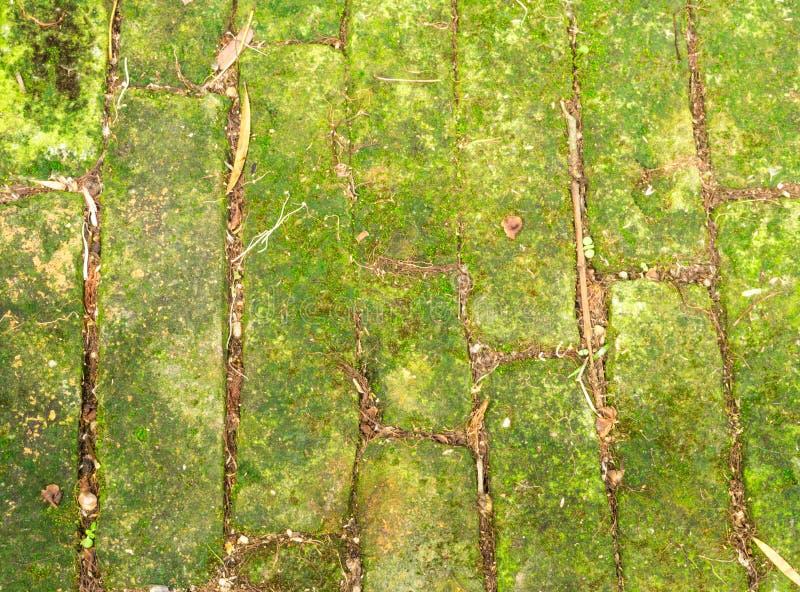 Moss Concrete Brick verde en un piso en el jardín foto de archivo libre de regalías