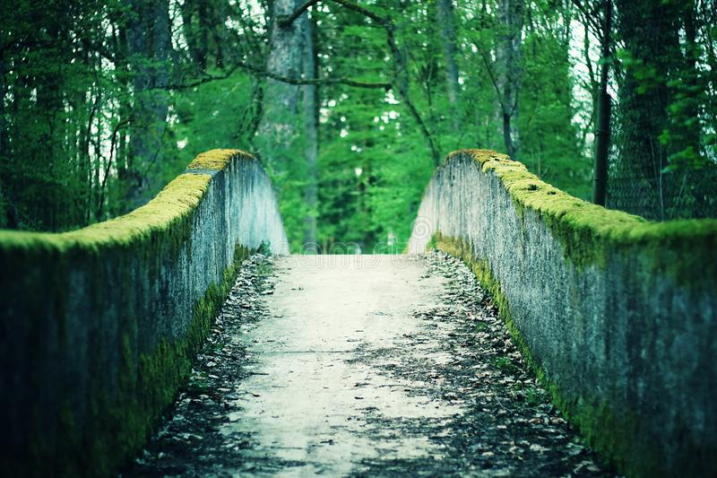 Moss concrete bridge through Forrest. Mystic moss covered concrete bridge through Forrest stock photo