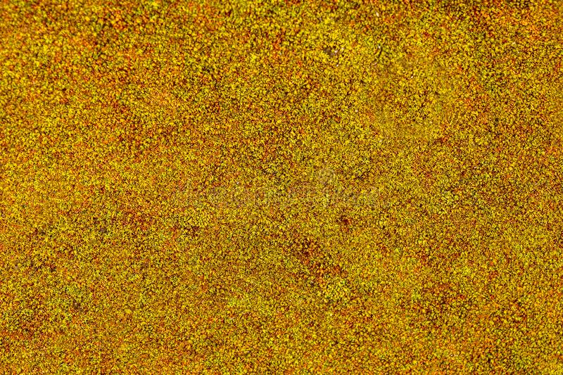 Moss on concrete wall, texture and background royalty free stock images