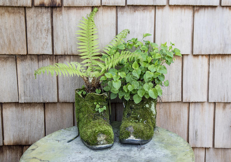 Moss covered boots planted with ferns. And leafy weed royalty free stock photos