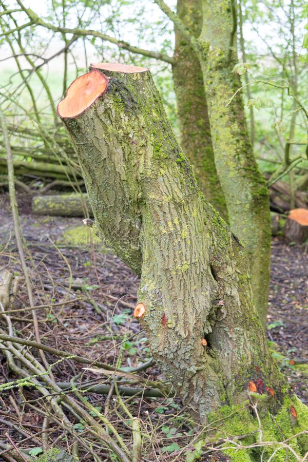 Moss Covered Cut Tree fotos de stock royalty free