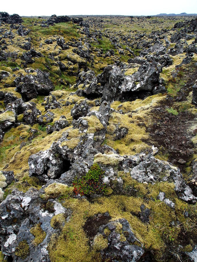 Moss covered lava field royalty free stock photo