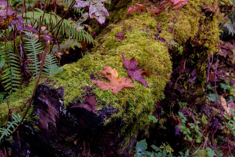 Moss Covered Logs images stock