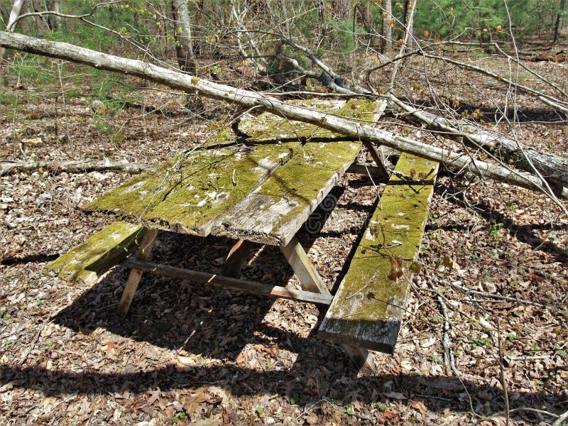 Moss Covered Picnic Table en camping abandonado imagen de archivo libre de regalías