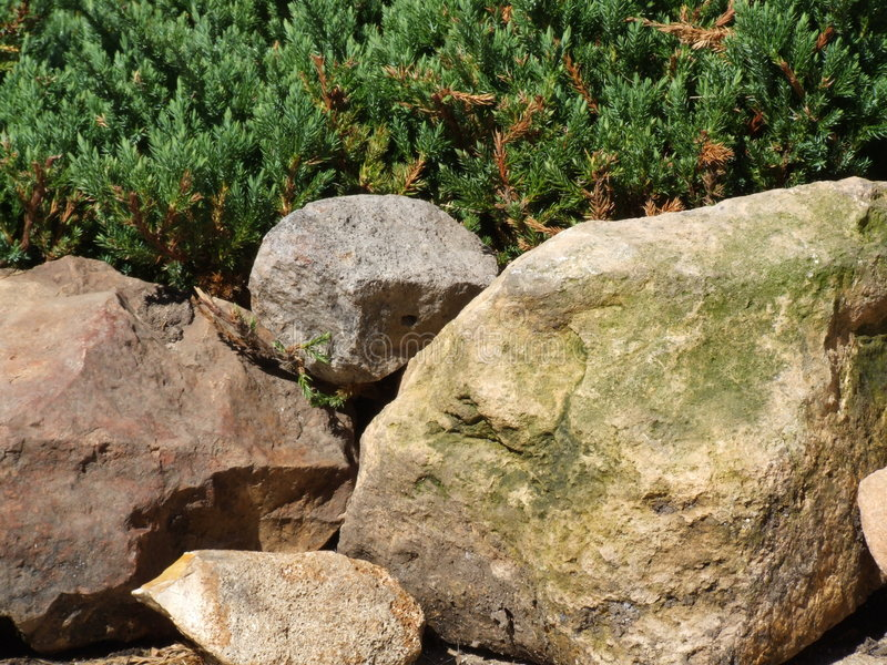 Moss covered rock and evergreen background stock images