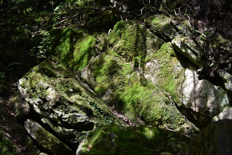 Moss covered rock, Mendip hills. A Moss covered rock on the path to Beacon Batch, Mendip hills royalty free stock images