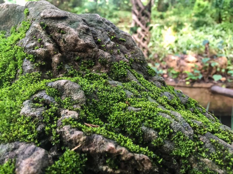 Moss covered rock by the teahouse royalty free stock image
