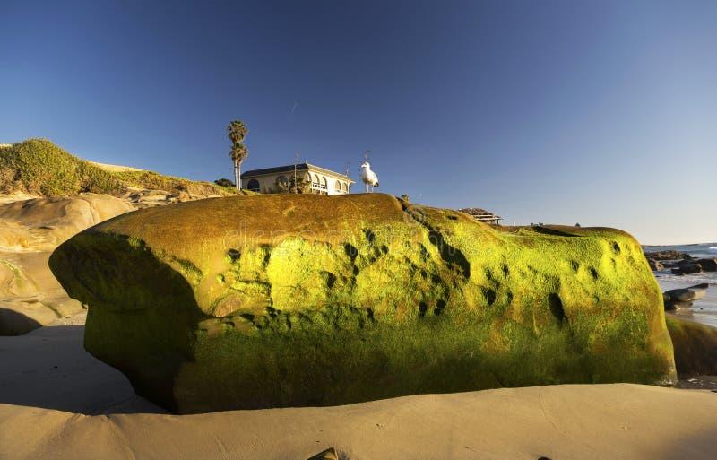 Moss Covered Rock verde en la playa San Diego California de Windansea fotografía de archivo libre de regalías