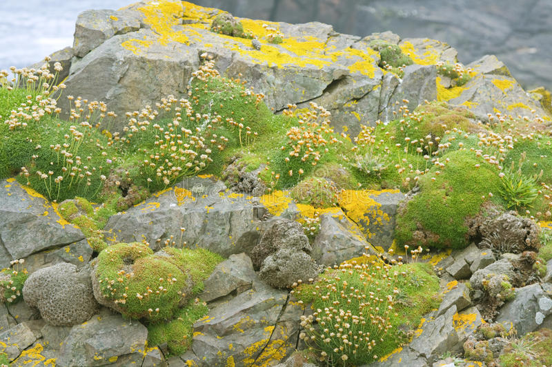 Moss covered rocks stock photos
