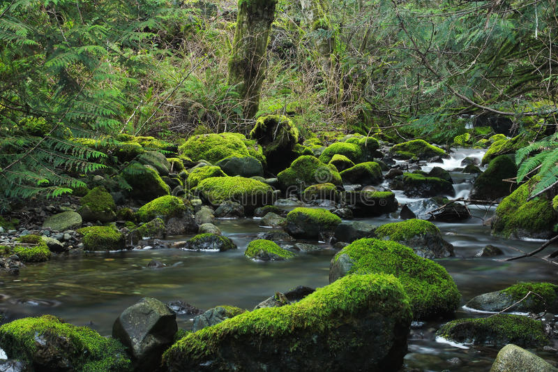 Moss Covered Rocks in Forest Stream stock photos