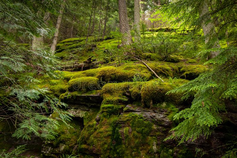 Moss Covered Rocks In Glacier National Park Stock Image Image Of