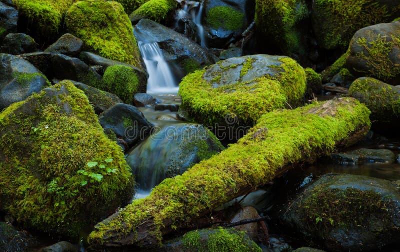 Moss covered rocks in a mountain stream, Washington stock photos