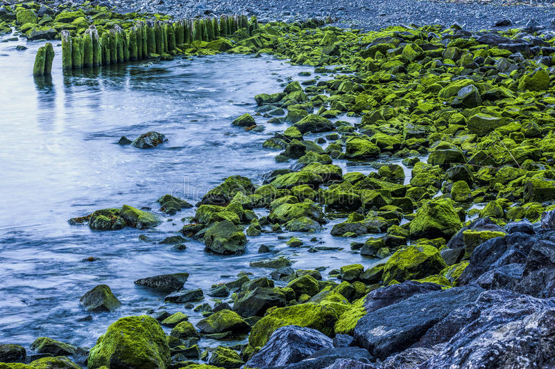 Moss covered rocks by the shore. stock photo