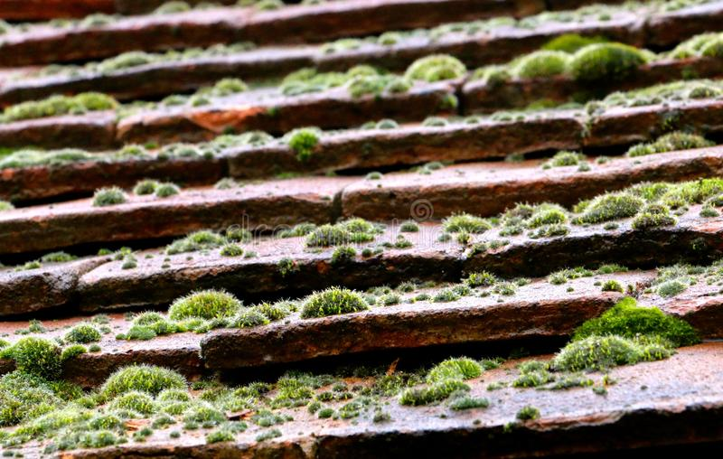 Moss covered roof tiles royalty free stock photography