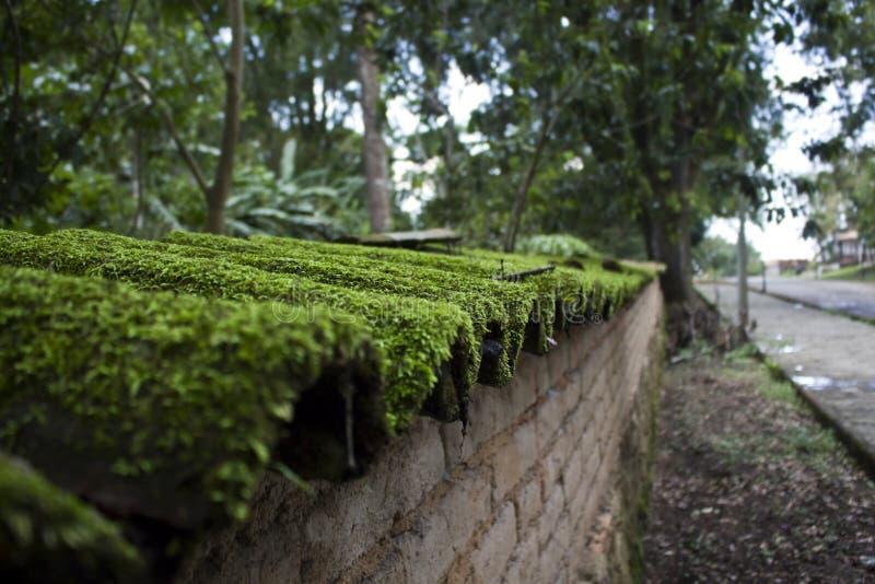 Moss Covered Shingles på en vägg fotografering för bildbyråer