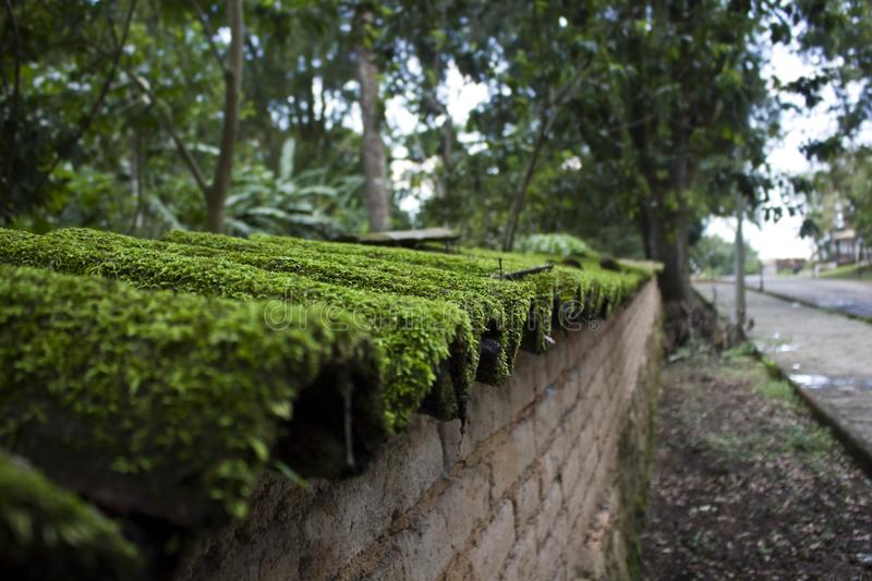 Moss Covered Shingles on a Wall stock image