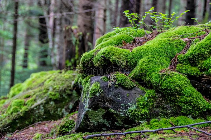 Moss-covered stone in the forest stock photo