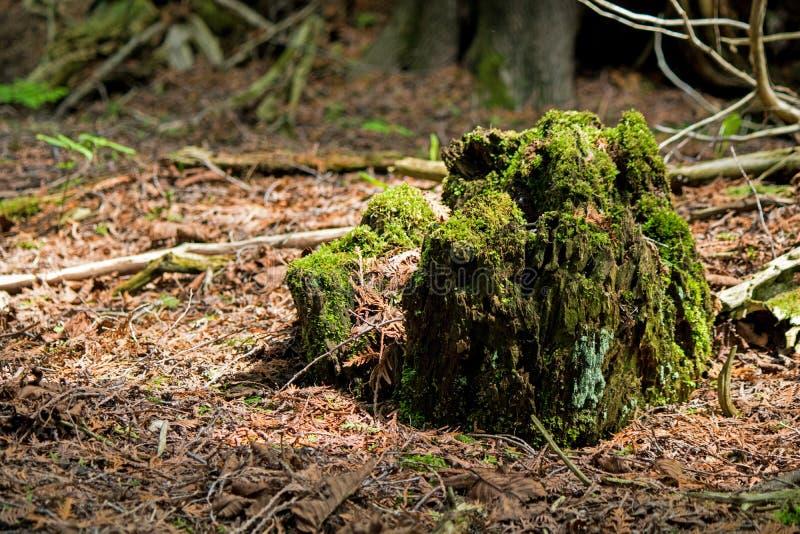 Moss Covered Trunk Of een Lange Gevallen Boom stock afbeelding