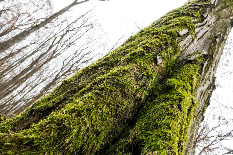 Moss covered V royalty free stock images