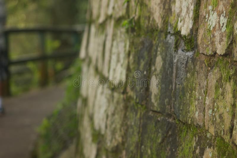 Moss-Covered Wall stock images
