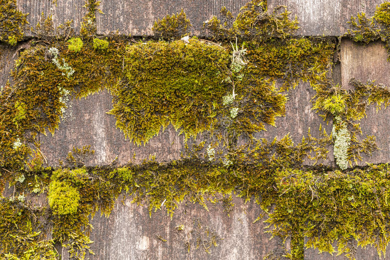 Moss Covered Wood Shingles stock images