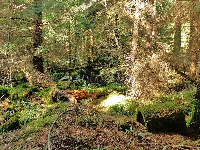 Moss Covering lizenzfreie stockfotos