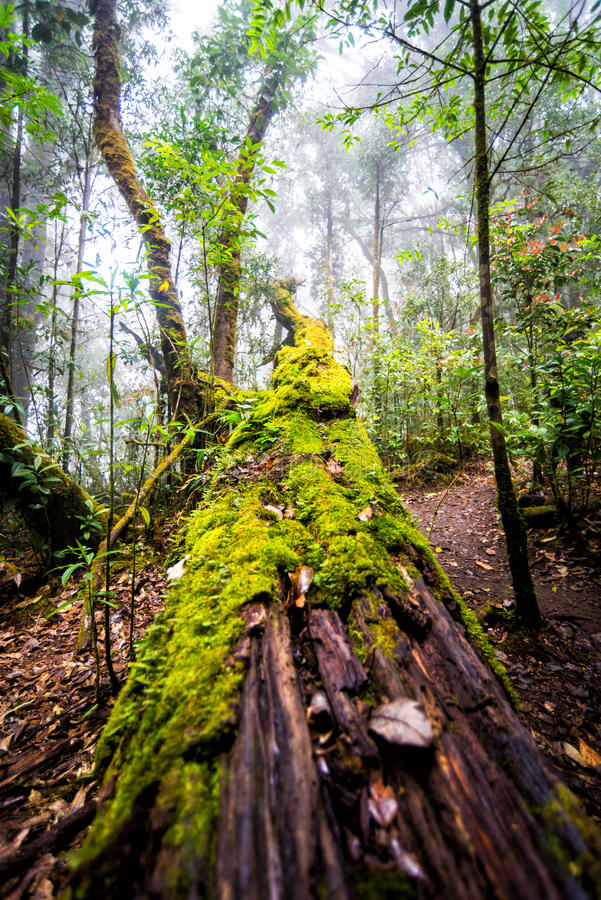 Moss on dead tree in forest stock image