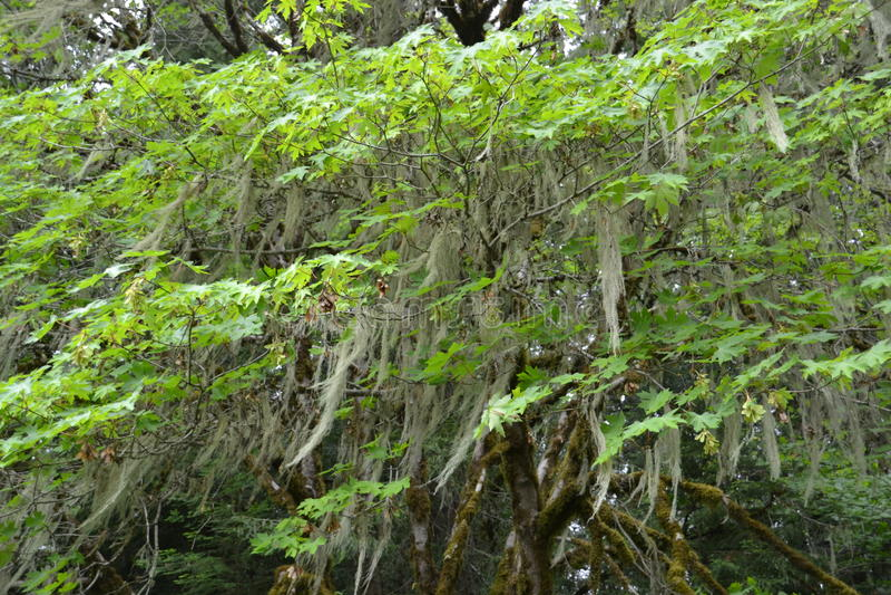 Moss draped trees stock photos