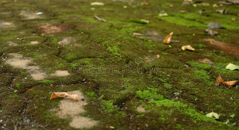 Moss and Dry Leaves on Brick Road. Old Brick Road Covered with Green Moss and Dry Leaves stock photos